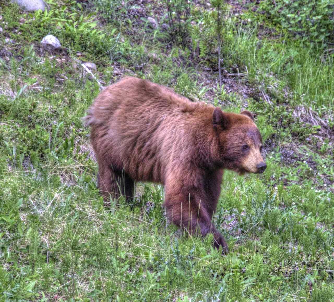 Umgang mit Bären