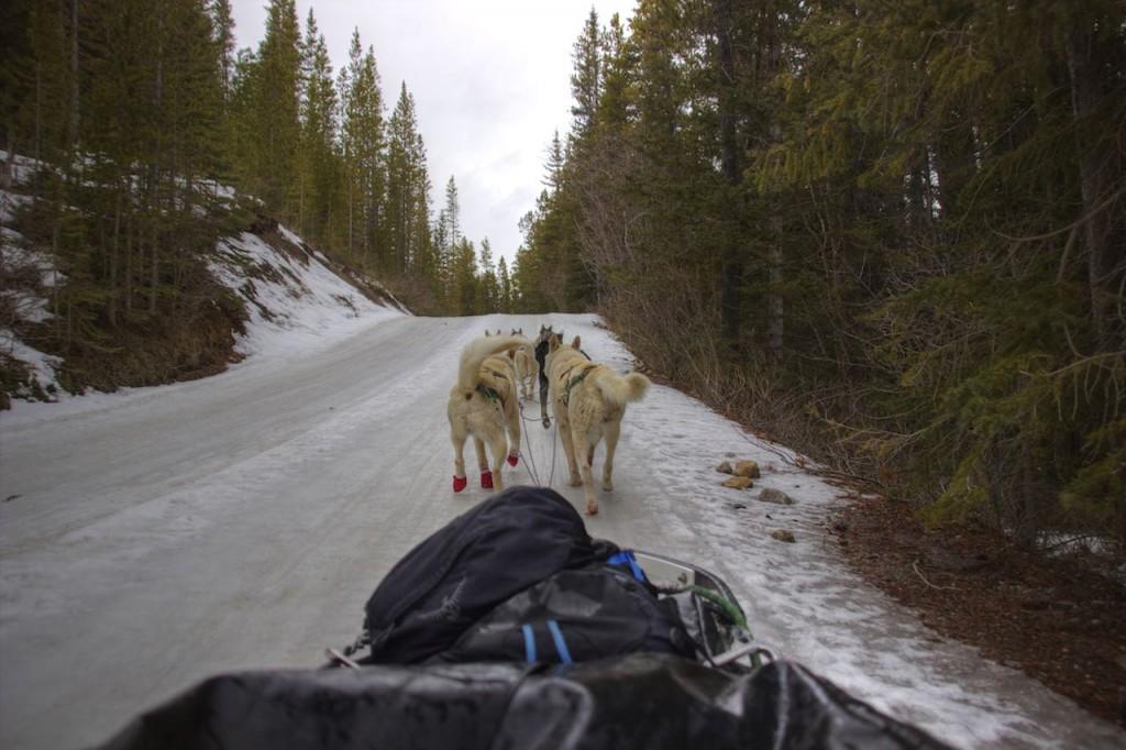 Bei Canmore, Alberta, Kanada machen wir eine Schlittenhundtour